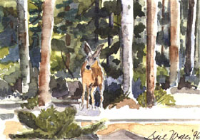 "click to order ""Deer by String Lake"""